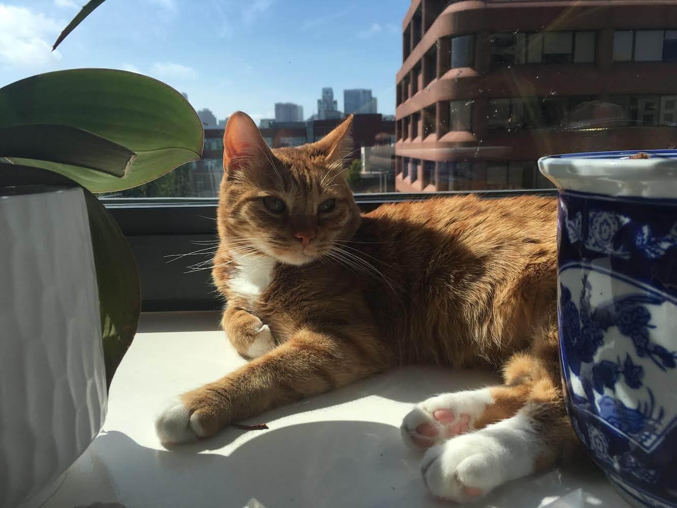 Tony the cat.